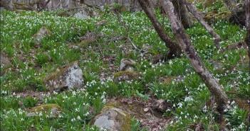 Флора Крыма