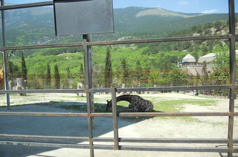 в зоопарке Сказка