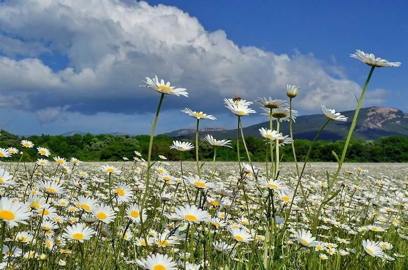 Цветы Крыма, фото Ю.Югансон