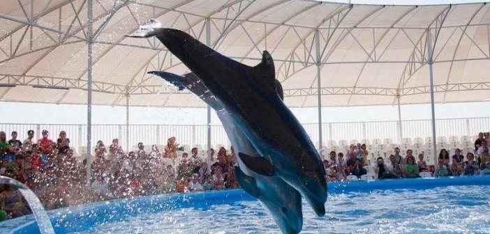 Дельфинарий Немо Феодосия