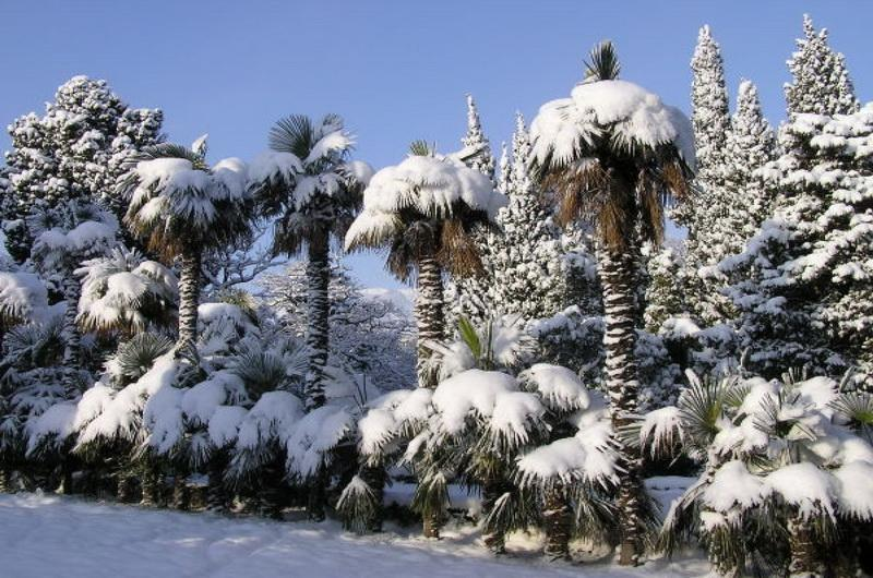 Никитский ботсад зимой