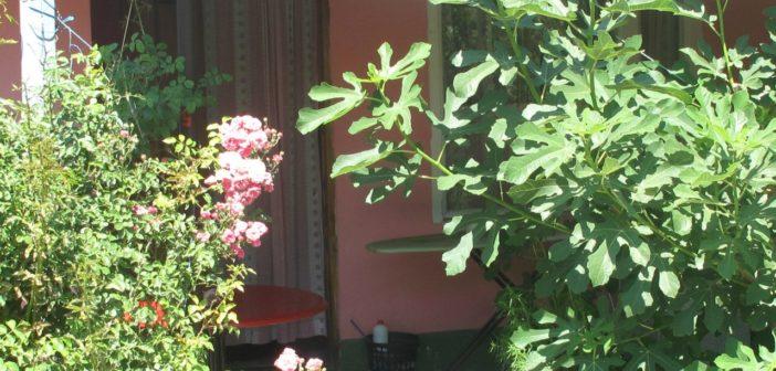 Гостевой дом Уют, Межводное