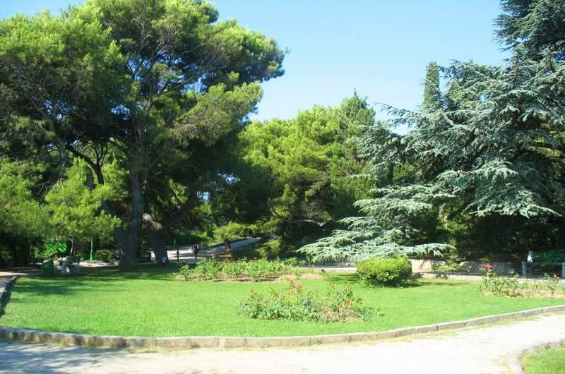 деревья мисхорского парка описание и фото тот