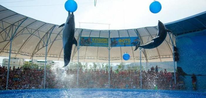 Дельфинарий Немо в Судаке