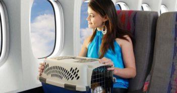 Путешествия с животными на самолете